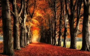 leaves, yellow, fall, path, trees, red