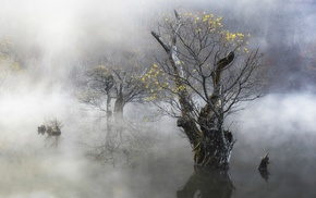 water, morning, yellow, South Korea, mist, nature