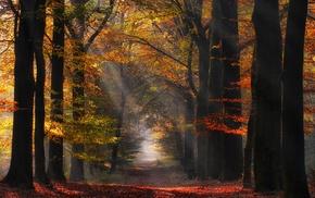 morning, nature, mist, path, atmosphere, landscape