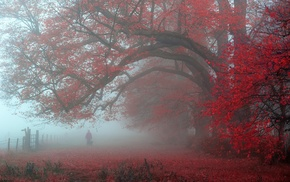 atmosphere, fence, trees, mist, leaves, red