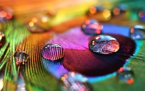 peacocks, macro, water drops, colorful, feathers
