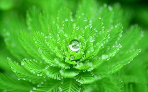 water drops, depth of field, closeup, plants, macro, nature