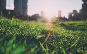 summer, nature, grass, blurred, depth of field, closeup