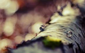 moss, macro, plants, trees