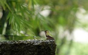 birds, plants, macro, animals