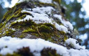 snow, plants, macro, trees