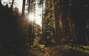 sunlight, forest