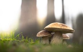 mushroom, macro