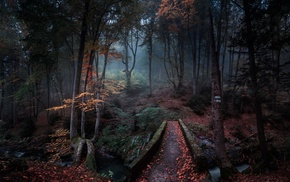 forest, morning, trees, creeks, fall, leaves