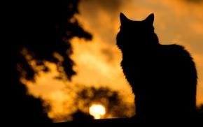 silhouette, dark, cat, pet, animals