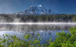 pine trees, lake, nature, mist, branch, USA
