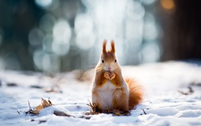 squirrel, snow