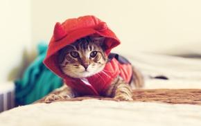 kittens, hoods, cat