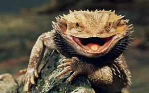 Bearded Dragon, animals, lizards