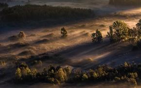 landscape, morning, trees, mist, sunrise, sunlight
