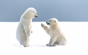 polar bears, baby animals, snow, cubs, bears, animals