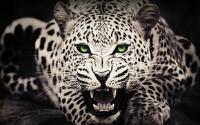 animals, green eyes, leopard