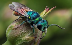 macro, plants, insect, animals, hymenoptera