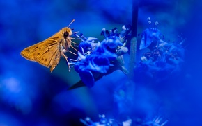 insect, plants, lepidoptera, macro, animals