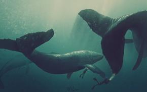 divers, artwork, whale