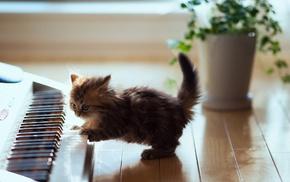 baby animals, kittens, piano, cat, animals
