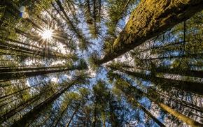 Washington state, Moulton Falls, trees