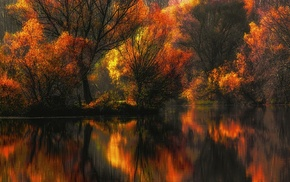 forest, colorful, leaves, trees, reflection, yellow