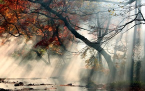 water, leaves, red, sun rays, mist, trees