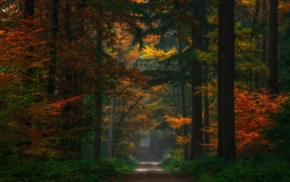 fairy tale, dirt road, colorful, shrubs, forest, Netherlands