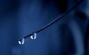 water drops, macro