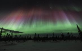 trees, snow, sky, landscape, aurorae