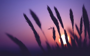 Sun, silhouette, plants
