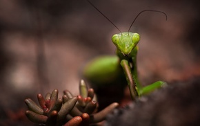 animals, macro, insect