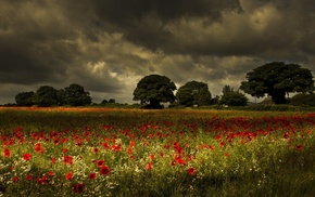 field, trees, landscape, poppies