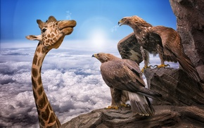 animals, sky, nature, birds, rock, Sun