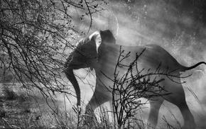 dust, photographers, Sebastiao Salgado, trees, sun rays, monochrome