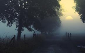 landscape, shrubs, trees, atmosphere, dirt road, mist