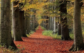 leaves, path, fall, nature, forest, trees