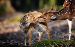 nature, animals, deer, baby animals