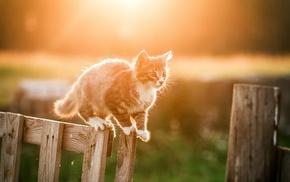 fence, kittens, cat