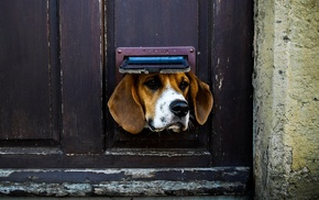 door, animals, dog