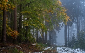 fall, trees, morning, path, mist, forest