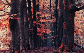 forest, fall, path, trees, leaves, red
