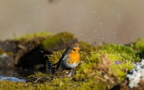 moss, birds, animals