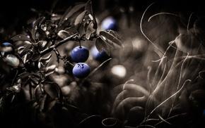 plants, macro, berries