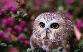 owl, animals