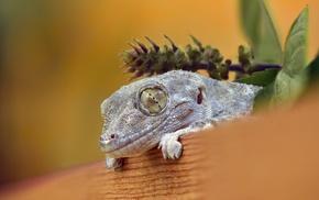 lizards, animals