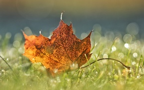 leaves, fall, closeup, macro, field, grass