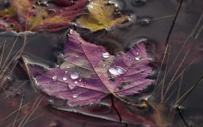 water drops, closeup, fall, nature, grass, macro