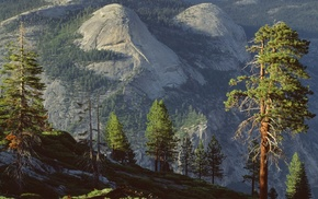 Yosemite National Park, landscape, nature, forest, pine trees, sunlight